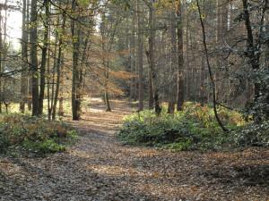 The left hand path